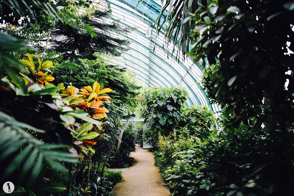 Jardin des Serres d'Auteuil, Paris (Summer 2015)