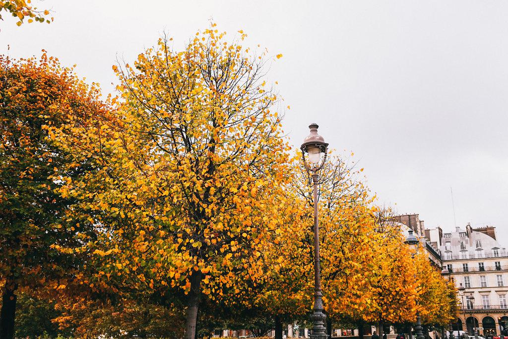Automne-Tuileries-3.jpg