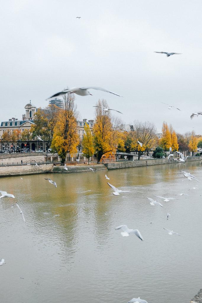 Mouettes-sur-les-quais-de-Seine-Paris-automne-2.jpg